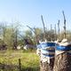 grafting fruit tree - PhotoDune Item for Sale