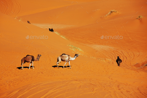 Caravan in desert - Stock Photo - Images