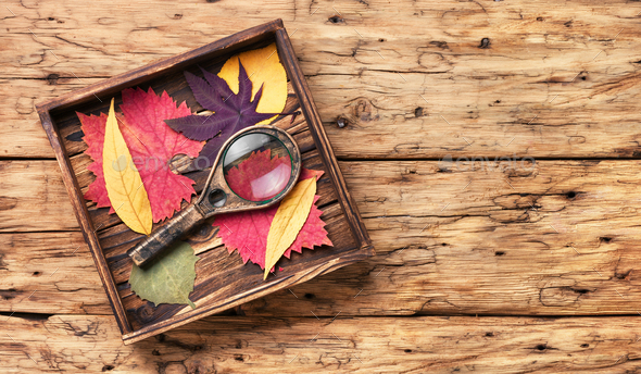 Set of autumnal leaves for herbarium - Stock Photo - Images