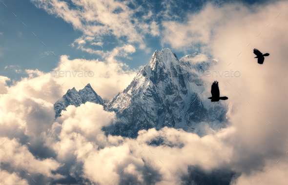 Flying birds against mountain with snowy peak in clouds - Stock Photo - Images