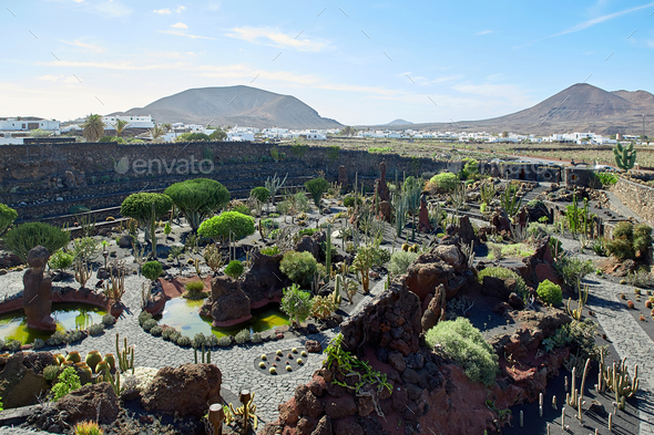 Cactus garden Jardin de Cactus in Lanzarote Island - Stock Photo - Images