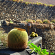 Cactus garden Jardin de Cactus in Lanzarote Island - PhotoDune Item for Sale