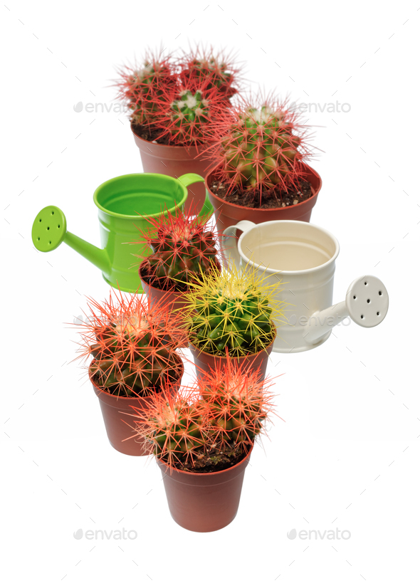 Bunch of cactuses and watering cans - Stock Photo - Images