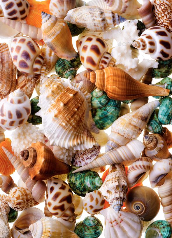 Seashells background - Stock Photo - Images