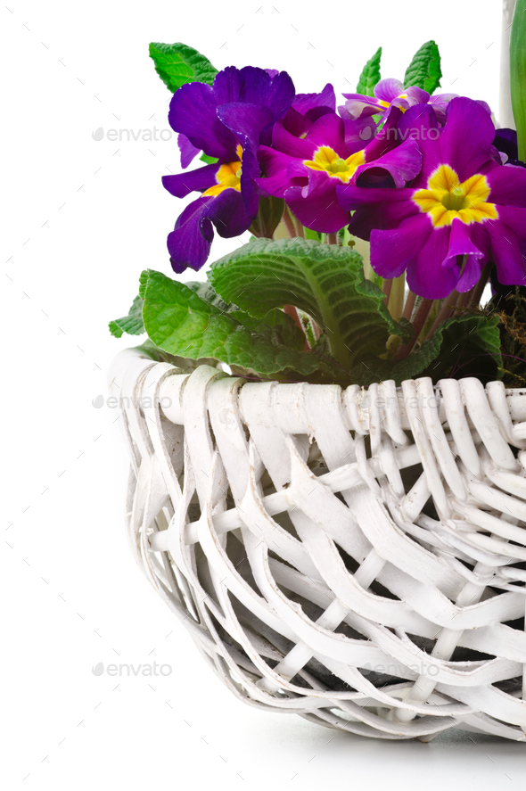 Spring bouquet - Stock Photo - Images