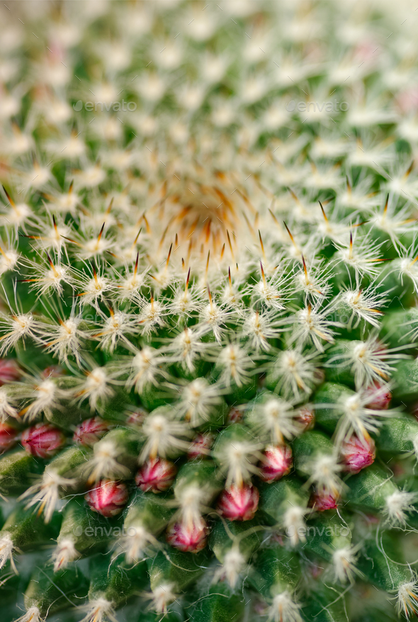 Cactus close-up shot - Stock Photo - Images