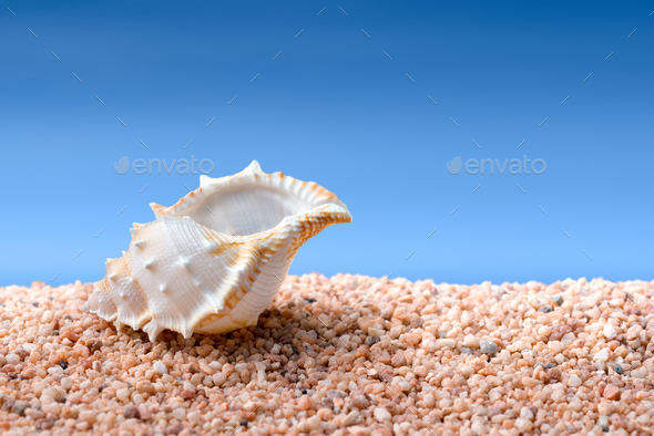 Seashell on a beach - Stock Photo - Images