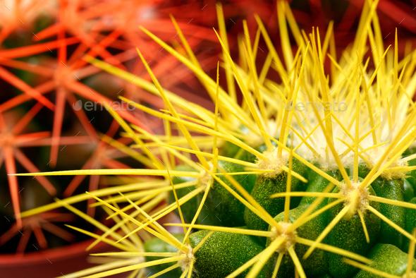 Cacti background - Stock Photo - Images