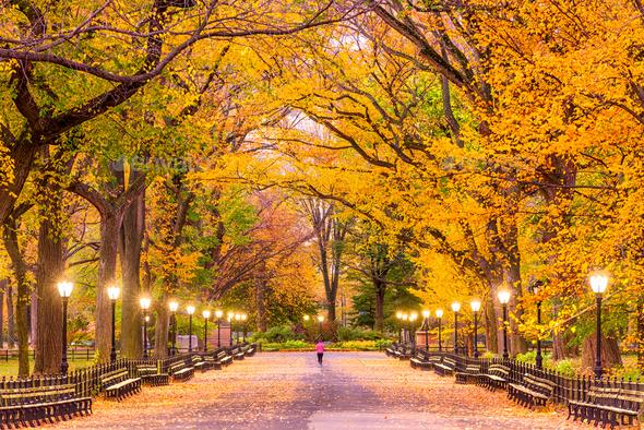Central Park Autumn - Stock Photo - Images