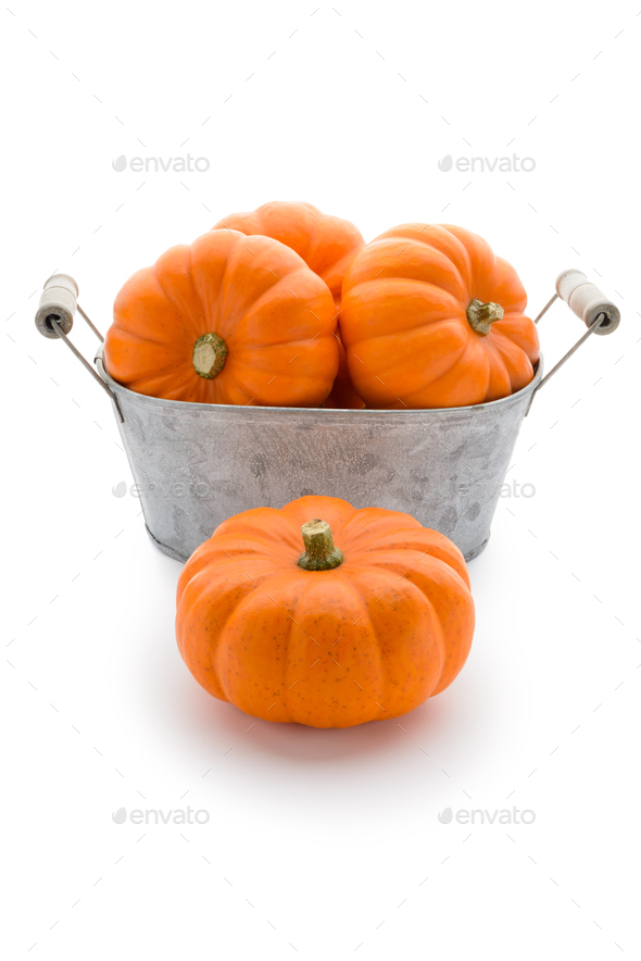 Pumpkins in a washbowl - Stock Photo - Images