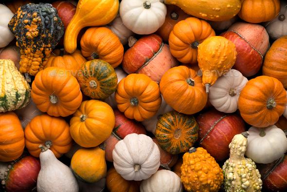 Pumpkins background - Stock Photo - Images