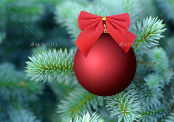Red Christmas bauble on a fir tree - Stock Photo - Images