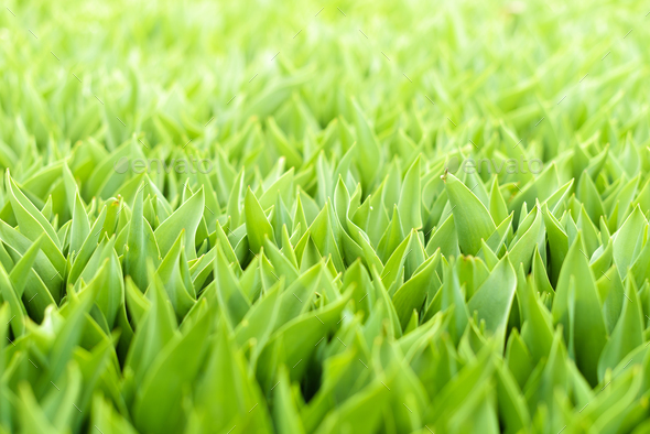 Green grass background - Stock Photo - Images
