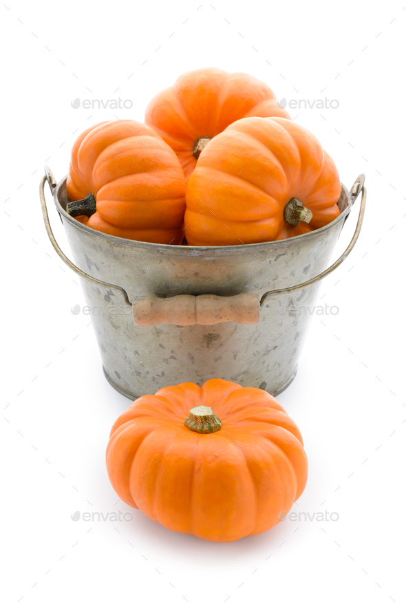 Bucketful of pumpkins - Stock Photo - Images