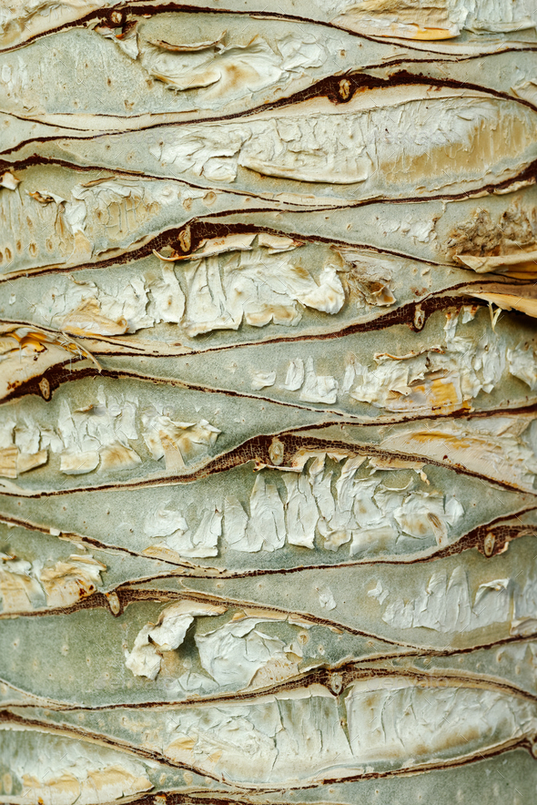 Dragon tree bark - Stock Photo - Images