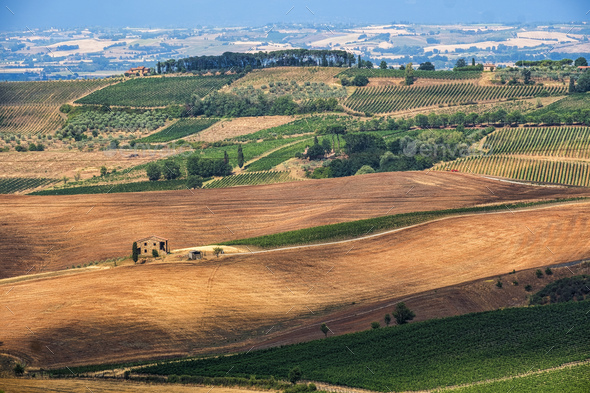Summer landscape near Montepulciano - Stock Photo - Images
