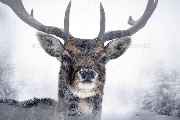 Deer and it's habitat - Stock Photo - Images