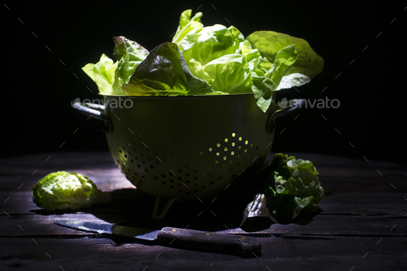 Presentation of green salad - Stock Photo - Images