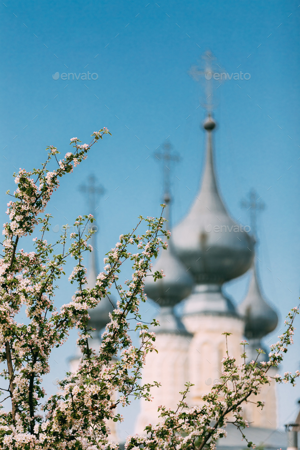Blooming lilacs against background of the Smolensk temple church - Stock Photo - Images