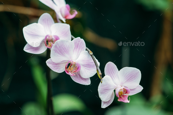 Beautiful White Flowers Of Orchid In Botanical Garden - Stock Photo - Images
