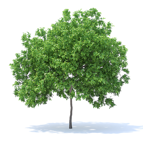 Lemon Tree 3D Model 4.4m - 3DOcean Item for Sale