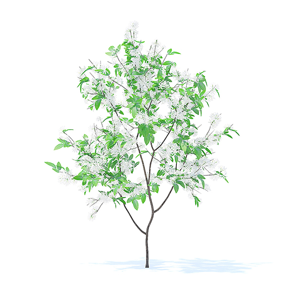 Orange Tree with Flowers 3D Model 1.6m - 3DOcean Item for Sale