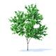 Orange Tree 3D Model 2.1m - 3DOcean Item for Sale