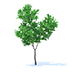 Orange Tree 3D Model 3.4m - 3DOcean Item for Sale