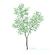 Orange Tree with Flowers 3D Model 3.4m - 3DOcean Item for Sale