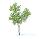 Orange Tree with Fruits 3D Model 3.4m