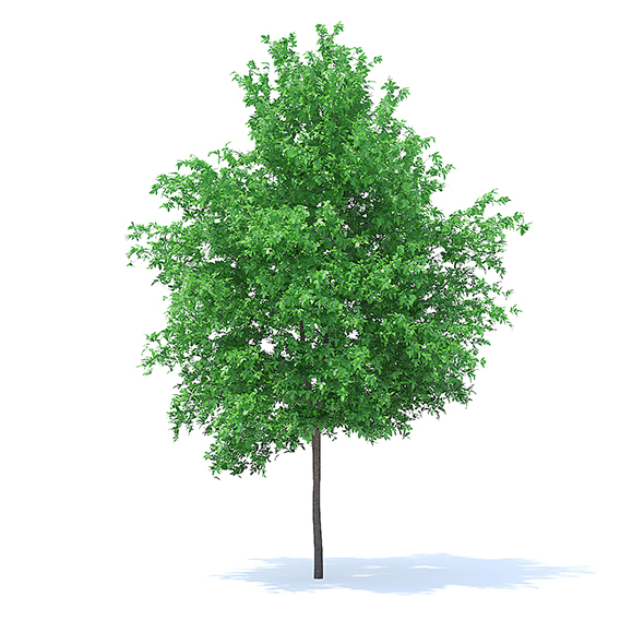 Orange Tree 3D Model 6m - 3DOcean Item for Sale