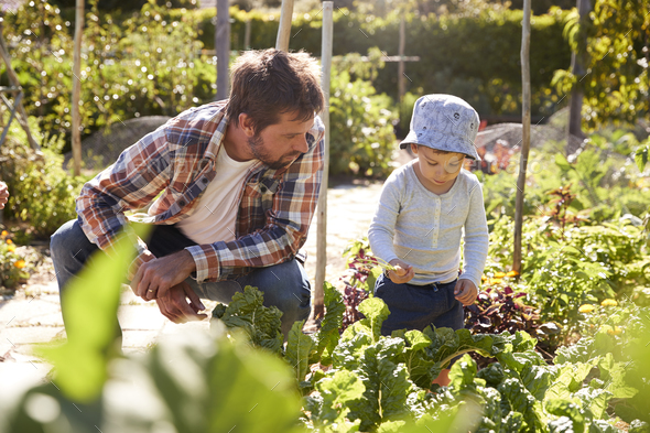 Son Helping Father As They Work On Allotment Together - Stock Photo - Images