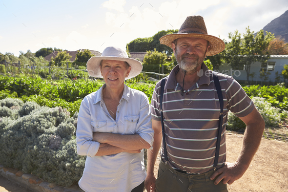 Portrait Of Mature Couple Standing On Community Allotment - Stock Photo - Images