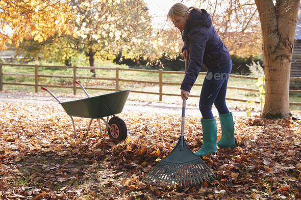 Mature Woman Raking Autumn Leaves In Garden - Stock Photo - Images