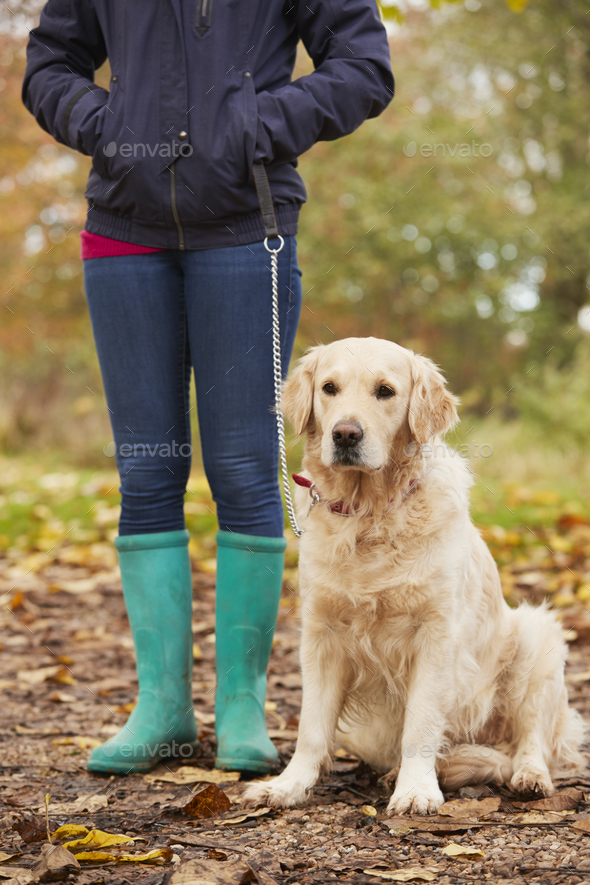 Close Up Of Mature Woman On Autumn Walk With Labrador - Stock Photo - Images