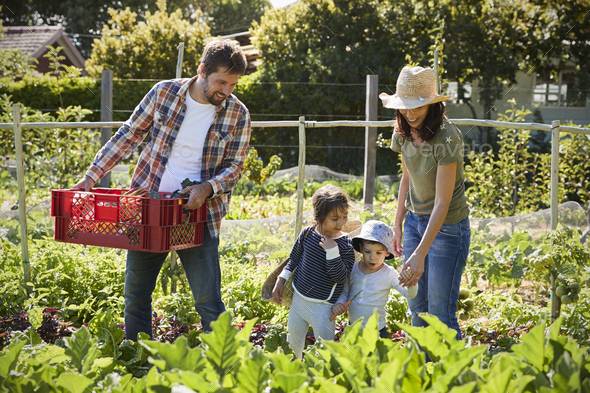 Family Harvesting Produce From Allotment Together - Stock Photo - Images