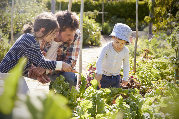 Children Helping Father As They Work On Allotment Together - Stock Photo - Images