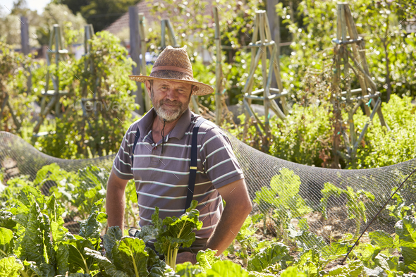 Portrait Of Mature Man Working On Community Allotment - Stock Photo - Images