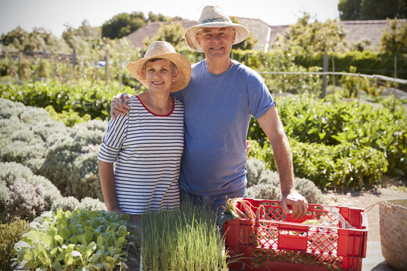 Portrait Of Mature Couple Working On Community Allotment - Stock Photo - Images