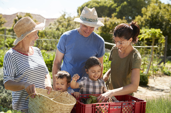 Grandparents With Adult Daughter And Grandchildren On Allotment - Stock Photo - Images