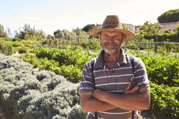 Portrait Of Mature Man Standing In Community Allotment - Stock Photo - Images