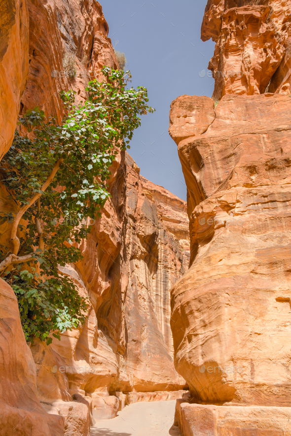 the siq canyon. Petra, Jordan country - Stock Photo - Images