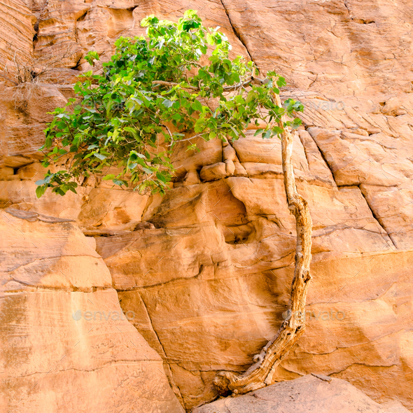 tree on the rock - Stock Photo - Images