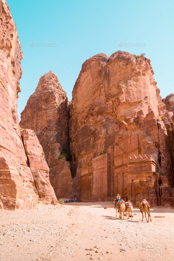 Bedouin man and camels - Stock Photo - Images