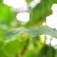 Growing Cucumbers in the Greenhouse by Method of Drip Irrigation - VideoHive Item for Sale
