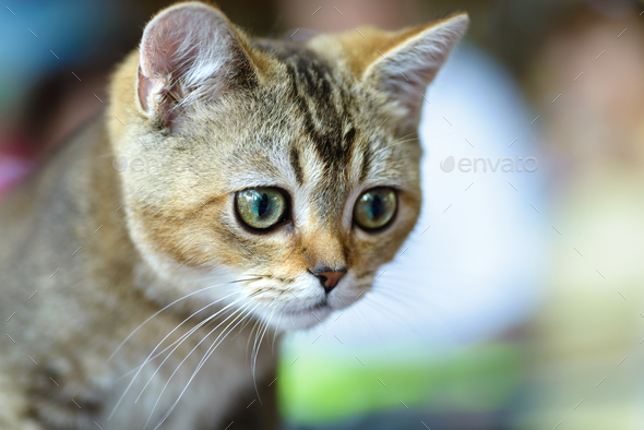Young Bengal cat - Stock Photo - Images