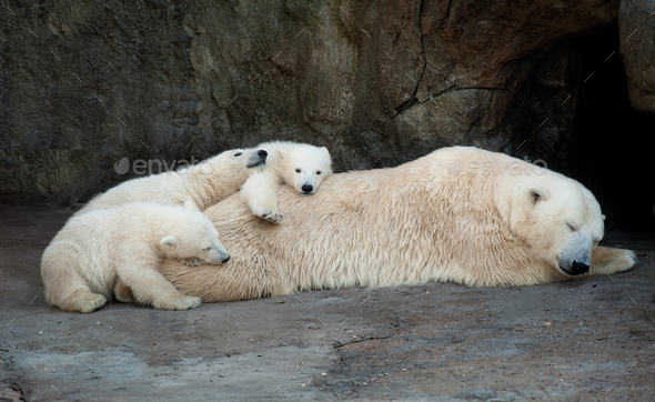 Mom and kids - Stock Photo - Images