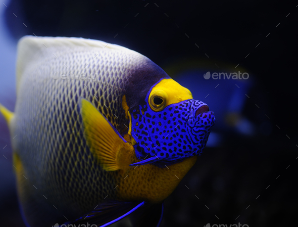 Tropical fish - Stock Photo - Images