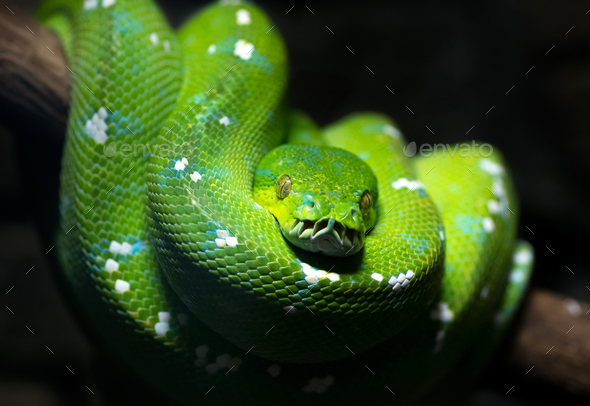 Green snake - Stock Photo - Images