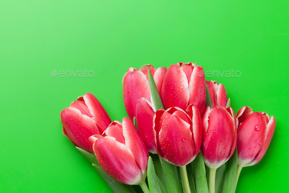 Red tulip flowers bouquet over green background - Stock Photo - Images